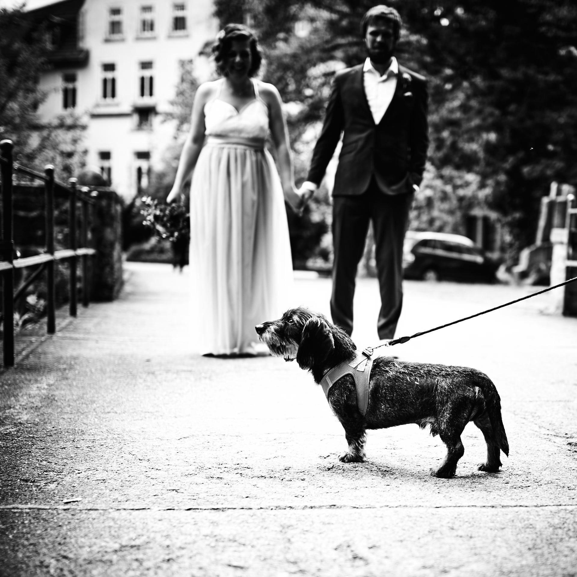 Hund beim Brautpaarshooting auf Brücke